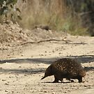 Crossing the road by saltbushbill