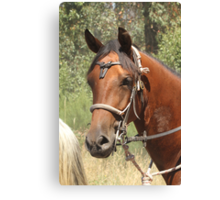 Pretty Boy Canvas Print