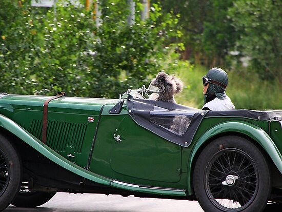Oldtimer with Dogs by RosiLorz