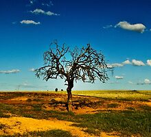 Sparse Tree Again - Parkes, NSW by Phoebe Kerin