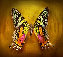 Butterfly - Butterfly of happiness  by Mike  Savad
