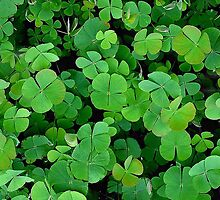 The Luck Of The Irish by Linda Miller Gesualdo