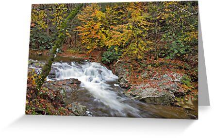 Laurel Creek Cascades III by Gary L   Suddath