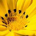 Yellow Flower 1 by rudolfh