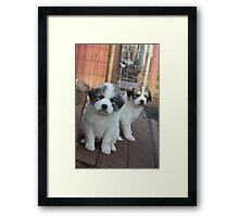 What Kind Of Mischief Should We Get Into? Framed Print