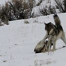 Wolves at Play #1 by Ken McElroy