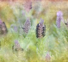 lovely lavender by Teresa Pople