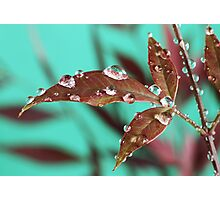 Red Leaves with Dew Drops 3 Photographic Print