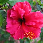 Red Hibiscus Flower by Geoffrey Higges