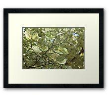 Nature Grain Framed Print