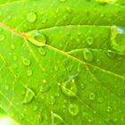 Raindrops on a Green Leaf by Luana Juknies