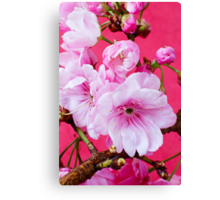 Cherry Blossom 2 Canvas Print
