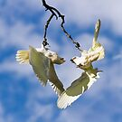 Crazy Corellas #2 by Barb Leopold