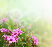 Spring Time Morning 2 by barnabychambers