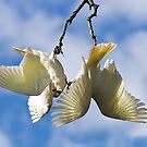 Crazy Corellas #3 by Barb Leopold
