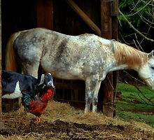 Friends ~ Chicken, Goat, Horse ~ by Charles & Patricia   Harkins ~ Picture Oregon