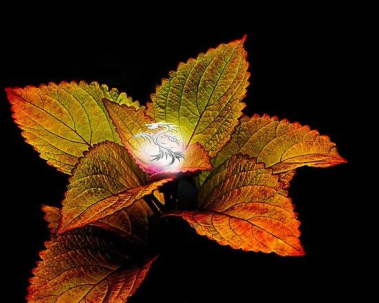 Dragon Plant Patronus by Michael Taggart