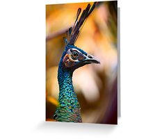 Peacock portrait 1 Greeting Card
