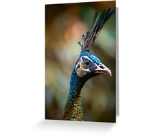 Peacock Portrait 3 Greeting Card