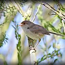 ~ Song Bird ~ by LeeoPhotography