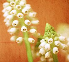 Textured Muscari by Martina Fagan