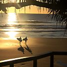 A surfers paradise by FollowTheSun