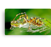 Wasp Spider Canvas Print