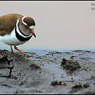 Plover by Greg Parfitt