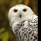 Snowy Owl by Bryony Griffiths