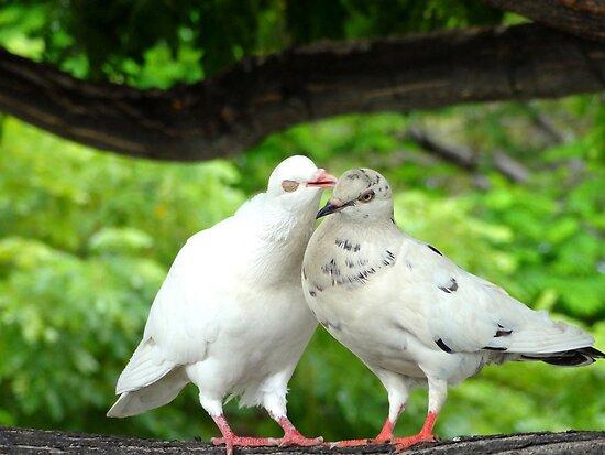 Urban Dove Story by Angelika Sielken