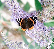 Butterfly by Matthew Nunn