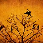 Cormorant Gathering by Amy Jackson