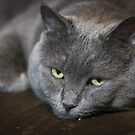 Gray Cat by Laura Godden