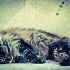 Cat Nap by Laura Godden