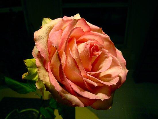 """Lydia's Rose"" by AlexandraZloto"