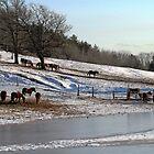 Beautiful Horses by nikspix