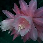Princess Cactus Flower by Geoffrey Higges