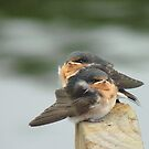 We'd Welcome An Insect Or Two!! - Welcome Swallows - NZ by AndreaEL