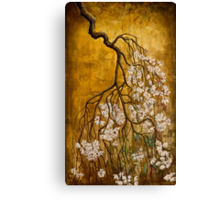 Blooming sakura Canvas Print