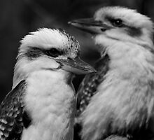 Two Kookaburras by Sue  Thomson