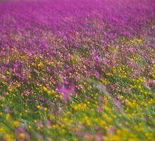 7 ????? . Frühling in den Alpen . The Flowers of the Alps . The Dachstein Mountains . Austria. Doktor Faustus. Favorites: 3 Views: 554 . Danke ! by © Andrzej Goszcz,M.D. Ph.D