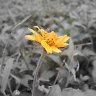 mellow yellow by Rishi Kant Joshi