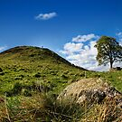 The Tree at Sycamore Gap by b8wsa