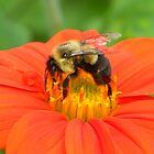 Bumblebee by RebekahShay