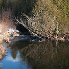 Winter Calm by nikspix