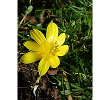 Sunny Buttercup Photographic Print