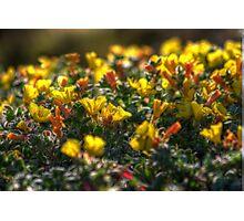 SpringFlowers_6242 Photographic Print