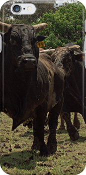 Rodeo Bulls by Candice84