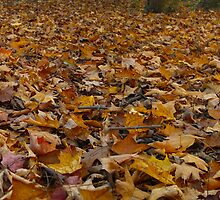On a bed of leaves,  Autumn Immersion by MarianBendeth