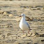 Lonely Seagull by Jackson  McCarthy